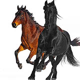 Lil Nas X feat. Billy Ray Cyrus Old Town Road (Remix) Sheet Music and Printable PDF Score | SKU 415327