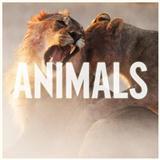Maroon 5 Animals Sheet Music and Printable PDF Score | SKU 425894